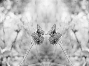 Alejandro Jodorowsky: el ejercicio del espejo
