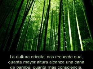 La lección de la caña de bambú