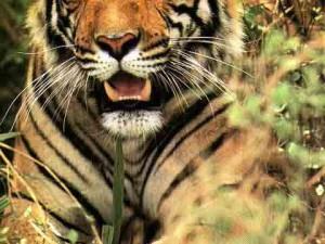 """""""Hijo de tigre nace rayado"""" Ritual psicomágico de Alejandro Jodorowsky para un joven que teme fracasar"""