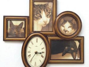 """¿Desde cuándo los gatos son """"domésticos""""?"""