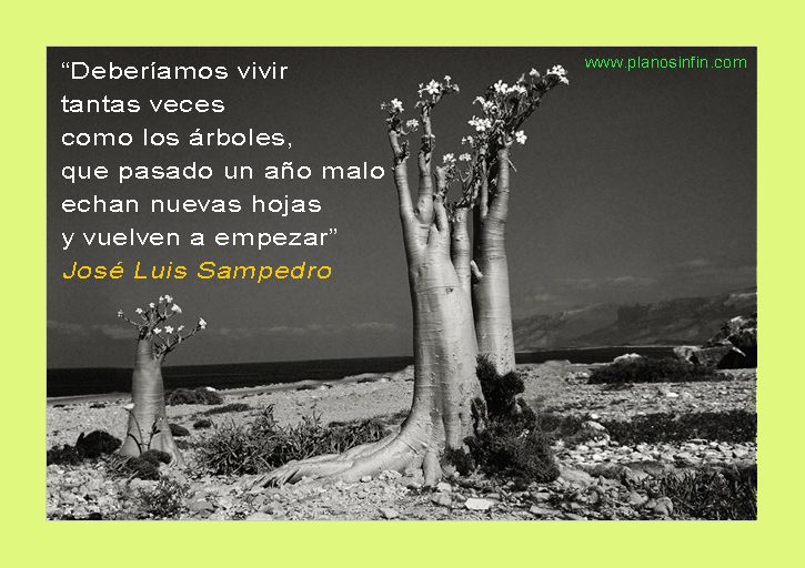Jose Luis Sampedro Frases De Sabiduría Plano Sin Fin