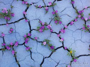 El decálogo de la resiliencia