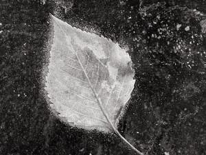 POETA (Poesofía de Alejandro Jodorowsky)