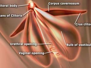 Define clítoris