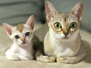 Gatos, parte de nuestra familia.