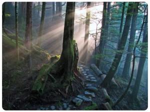 Mira hacia tu mundo interior, un bosque iluminado.