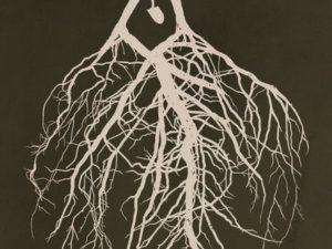 Conocer, analizar, sanar y trascender tus raíces