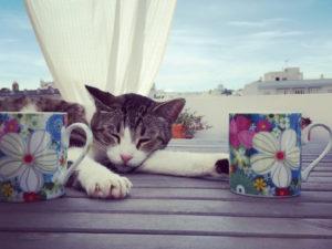 Post homenaje a nuestra gata Caracola