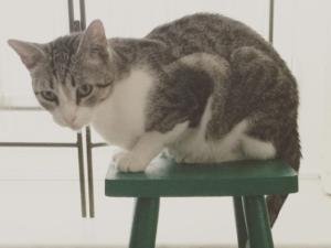 El código Caracola. Siete lecciones de una gata especial.