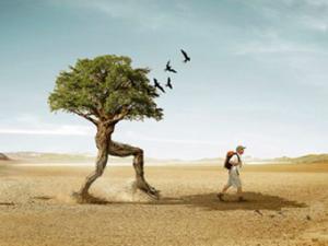 Buscando en el baúl de los recuerdos ¿Tu árbol genealógico te sigue?