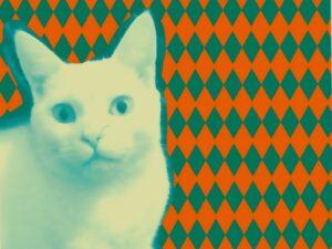 El gato color turquesa